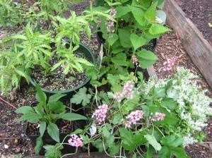 New_plants_2