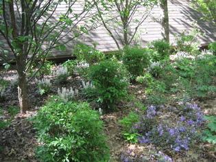 Mixed_border_in_idea_garden_3