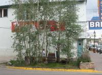 Leadville_garden_1