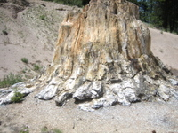 Petrified_stump
