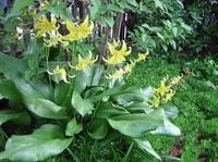 http://lesliet.typepad.com/gardenblog/images/pagoda.jpg