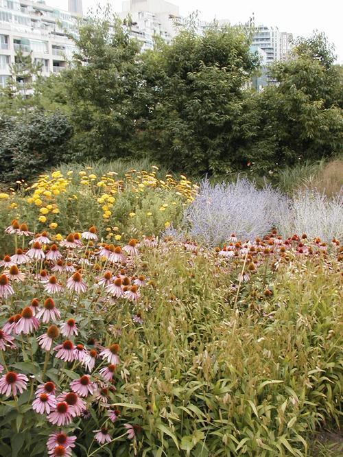 Toronto Music Garden September 2003 10 Courante