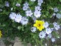 Culzean_flower_8