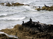 Culzean_water_birds