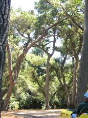Des_oak_forest