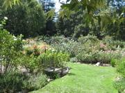 Des_rose_garden
