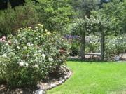 Des_rose_garden_2